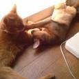 ◆自ら熱射病になろうとする猫