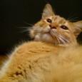 ◆のびーーる猫