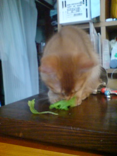 ◆ベジタリアン猫