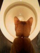toilet_in_kome.jpg